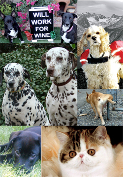 Pet Wine Labels